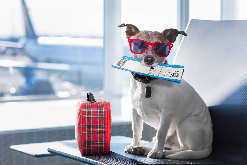 Pet Travel | Cambridge City Airport